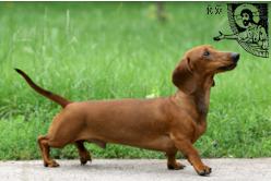 dachshund blessing