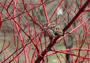 Bird in a bush at the Arboretum